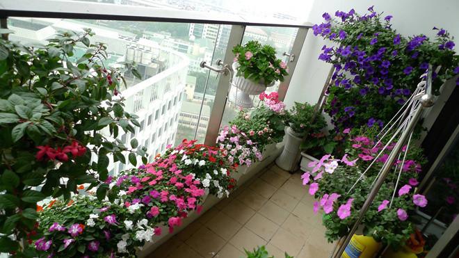 Ban công tầng cao độc đáo với sắc hoa rực rỡ